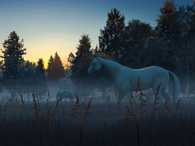 Nature 3d Screensavers Fog Horses Live Wallpaper A Foggy Dawn In Nature