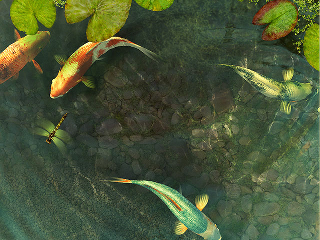 Koi Fish 3D Screensaver Screen shot