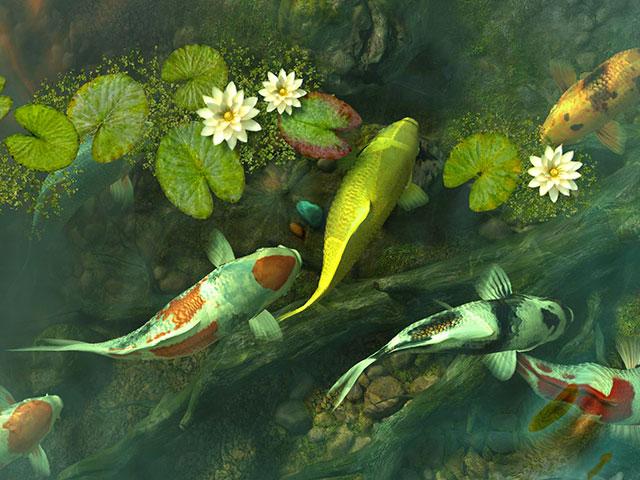 Fish 3D Screensavers - Koi Pond - Garden - The charm of a ...