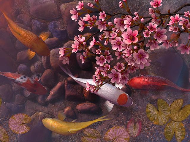 Fish 3d screensavers koi pond sakura for Koi 3d live wallpaper