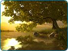 Download Free Lake Tree Screensaver