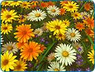 Download Free Wildflowers Screensaver